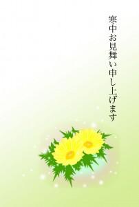寒中見舞いー福寿草2