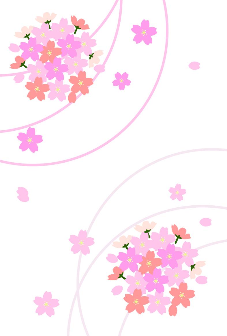 桜のカード(白背景)